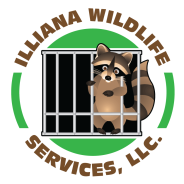 Wildlife Removal Indiana